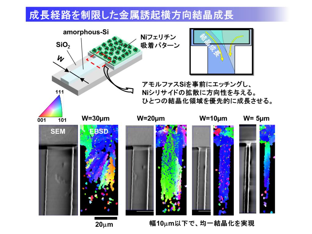 MILC振動子と結晶粒
